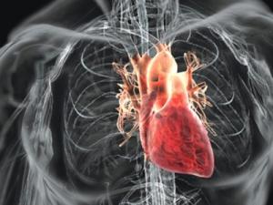 bolile-cardiovasculare-un-flagel
