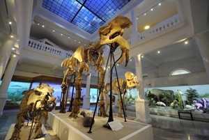 muzeu-antipa