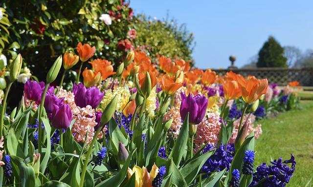 flowers-719076_640